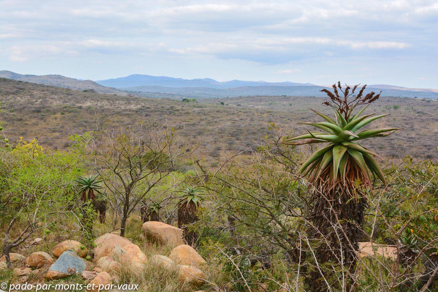 Hluhluwe - rhino ridge safari lodge