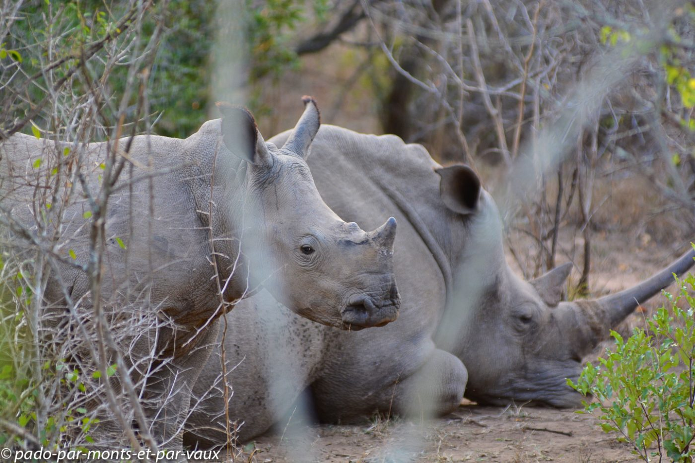 Hluhluwe - rhinocéros