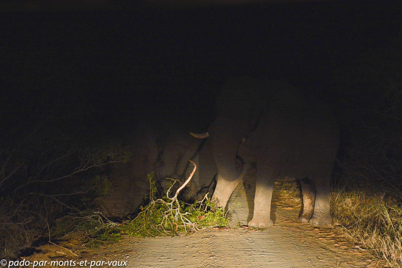 Hluhluwe - éléphant sur la route
