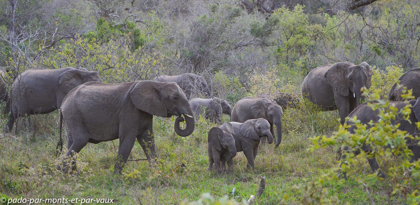Hluhluwe - éléphants
