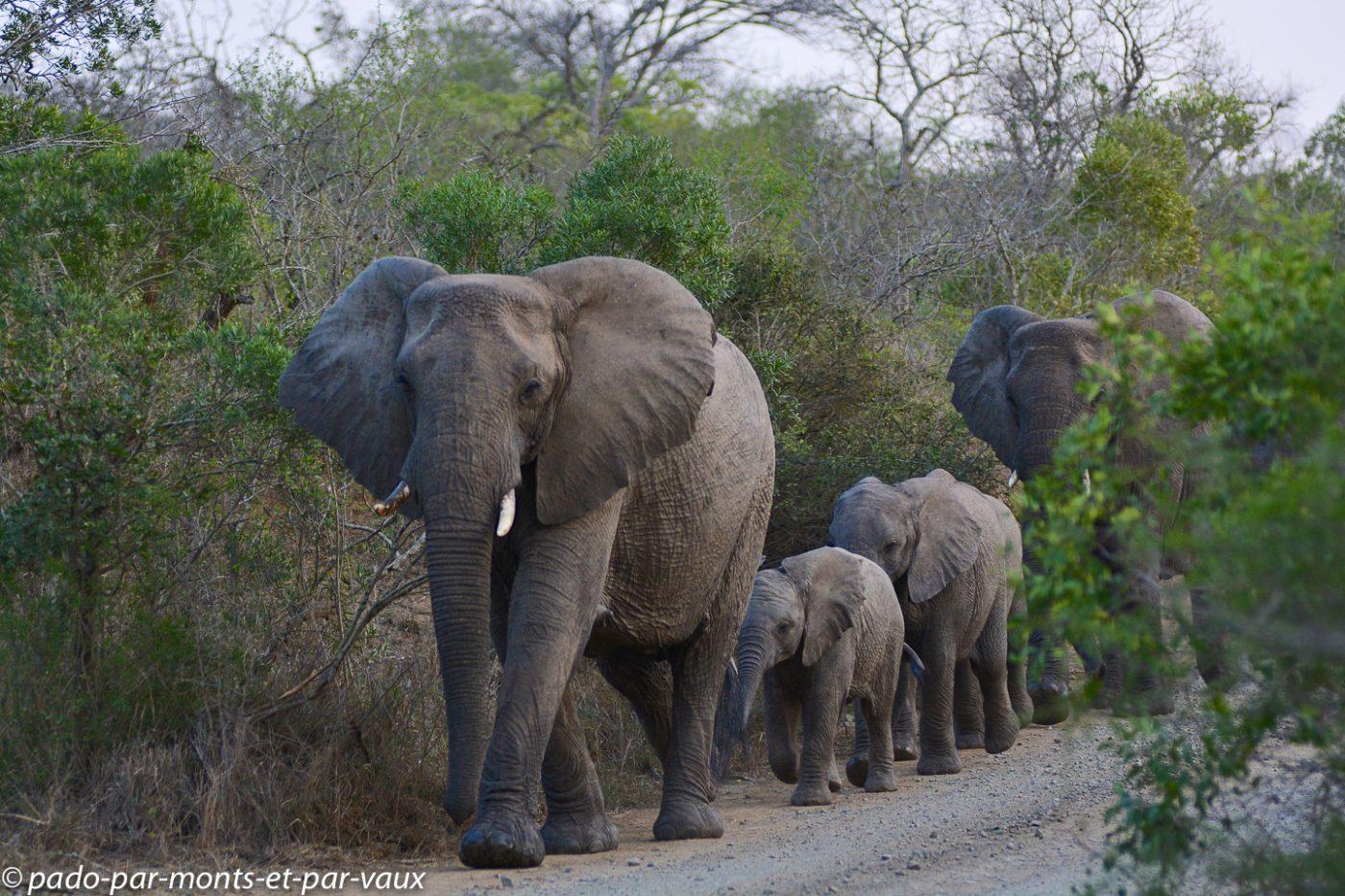 Hluhluwe éléphant