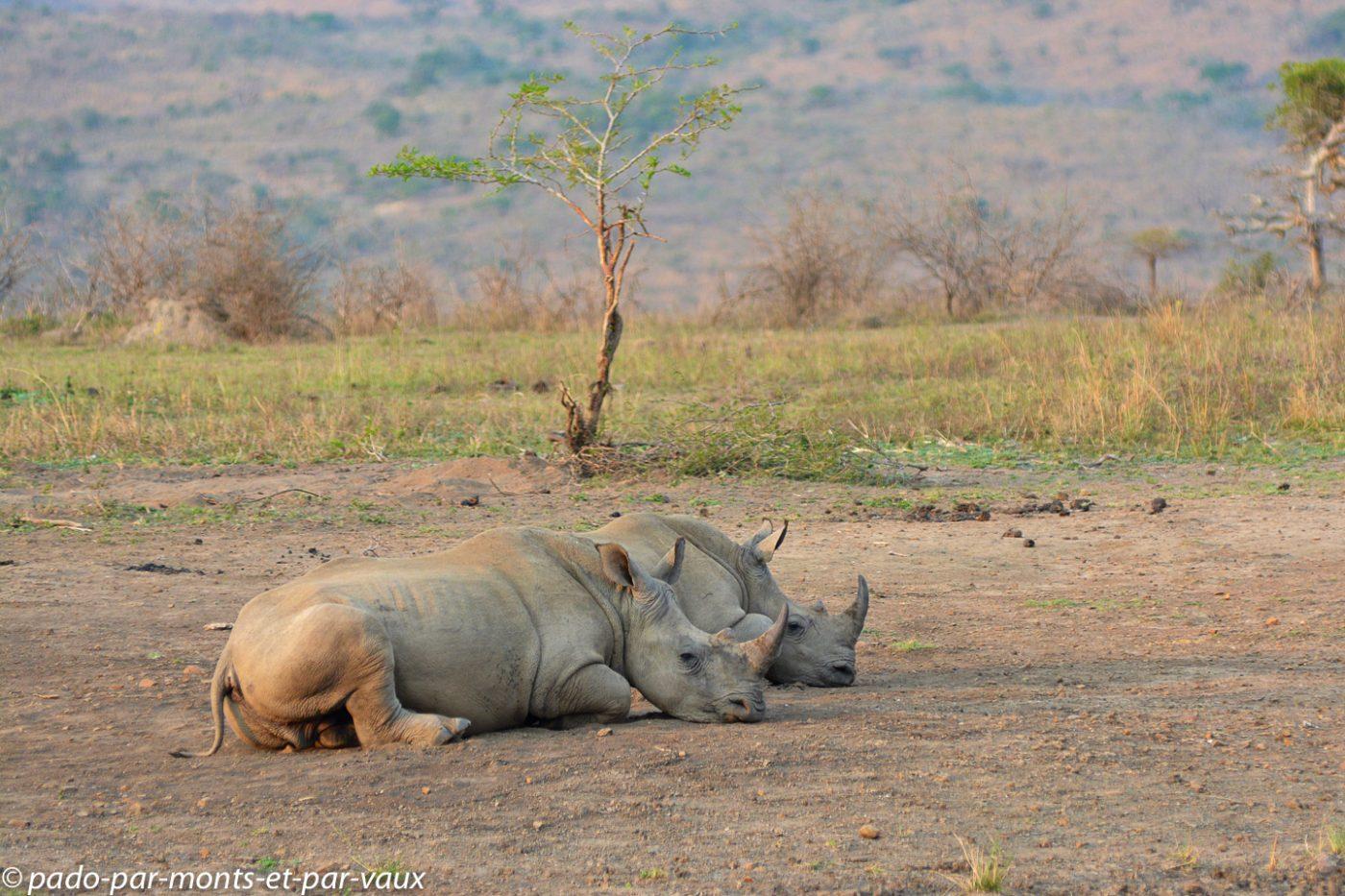 Hluhluwe- rhinocéros