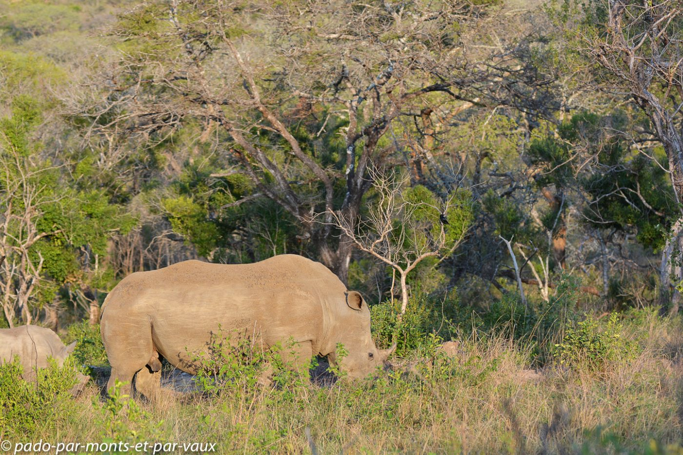 Hluhluwe rhinocéros
