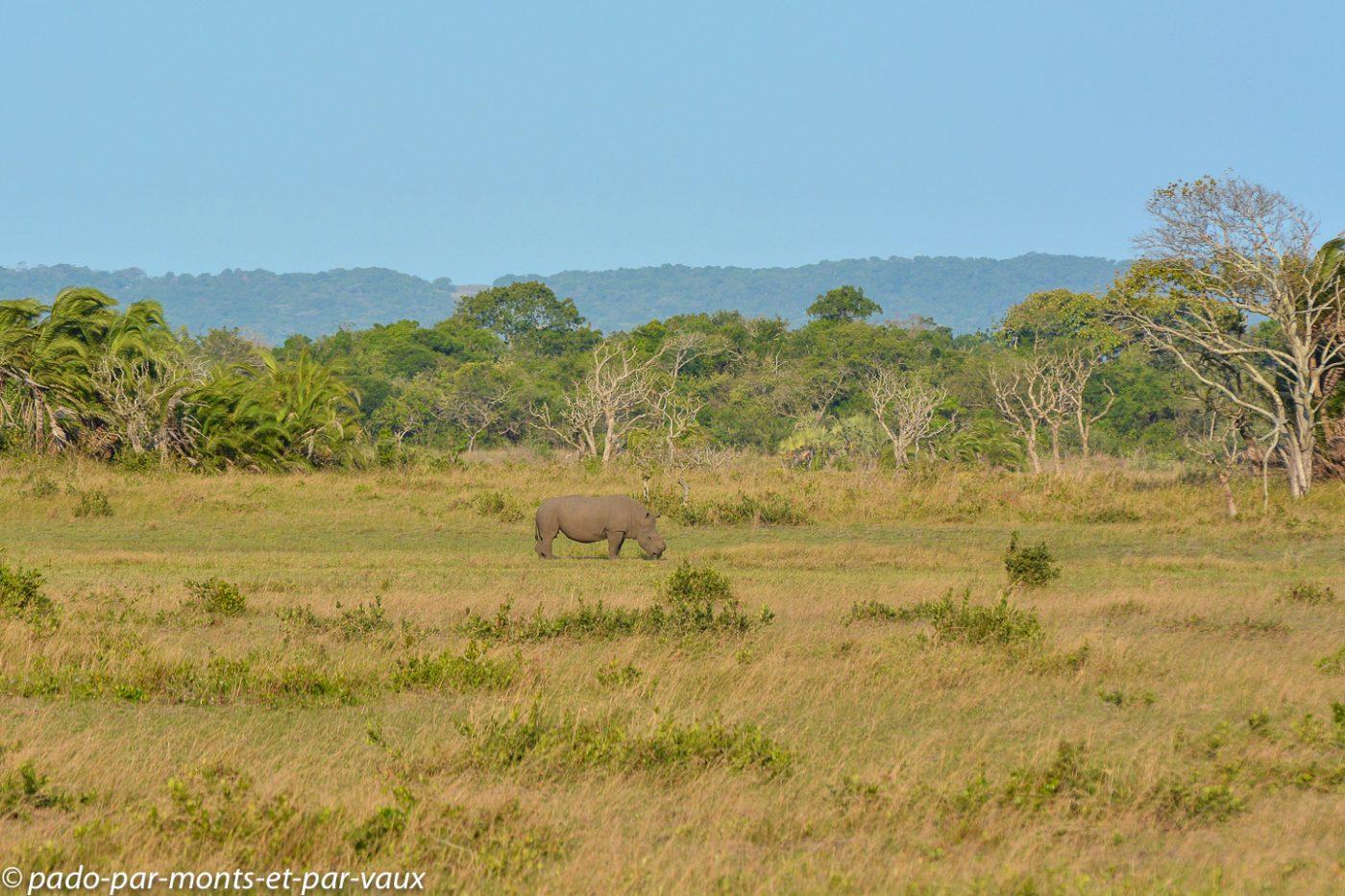 PN Santa Lucia - Rhinocéros