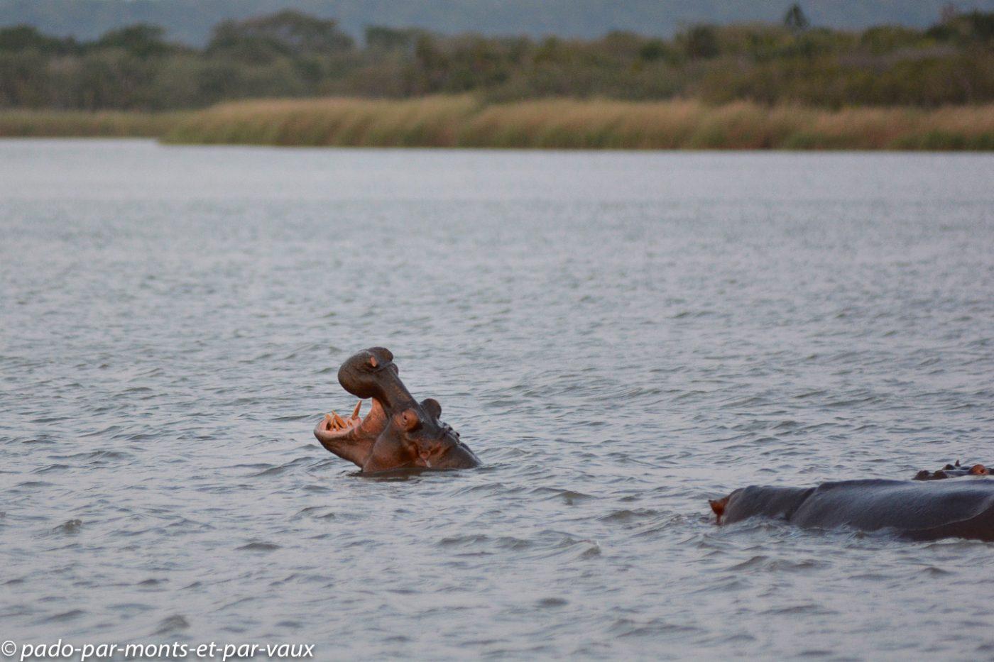 PN Santa Lucia - Hippopotames