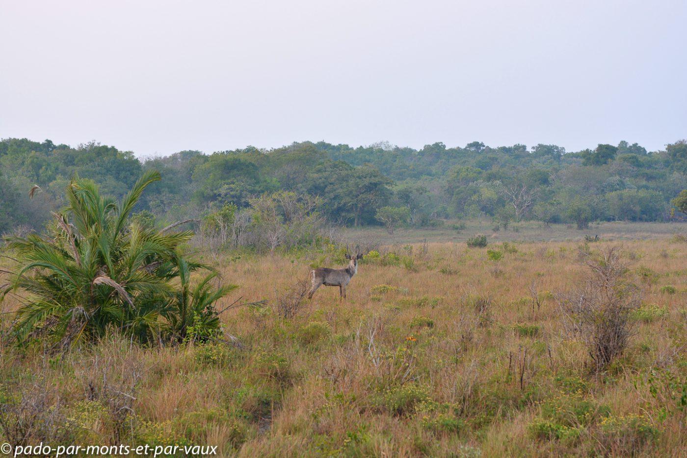 Santa Lucia Wetland park