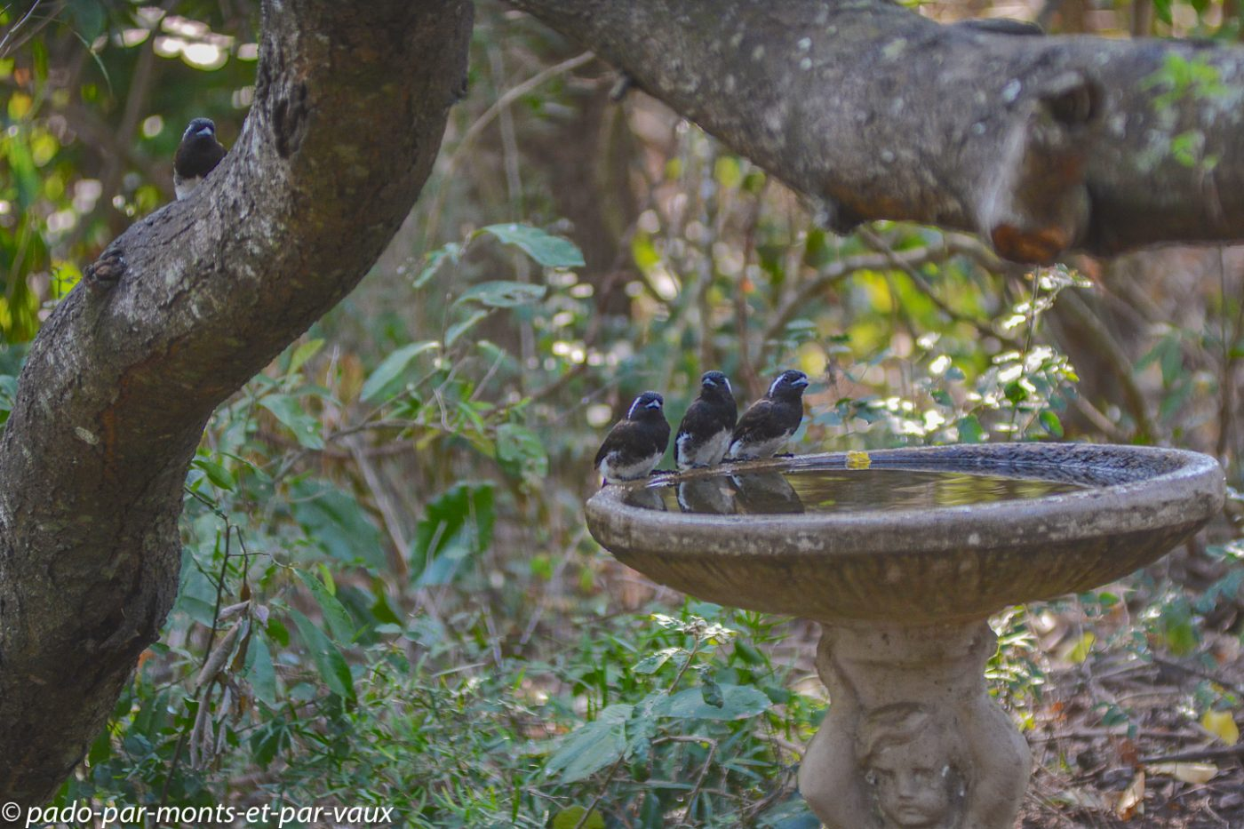 Santa Lucia Wetland park - Barbicans oreillards