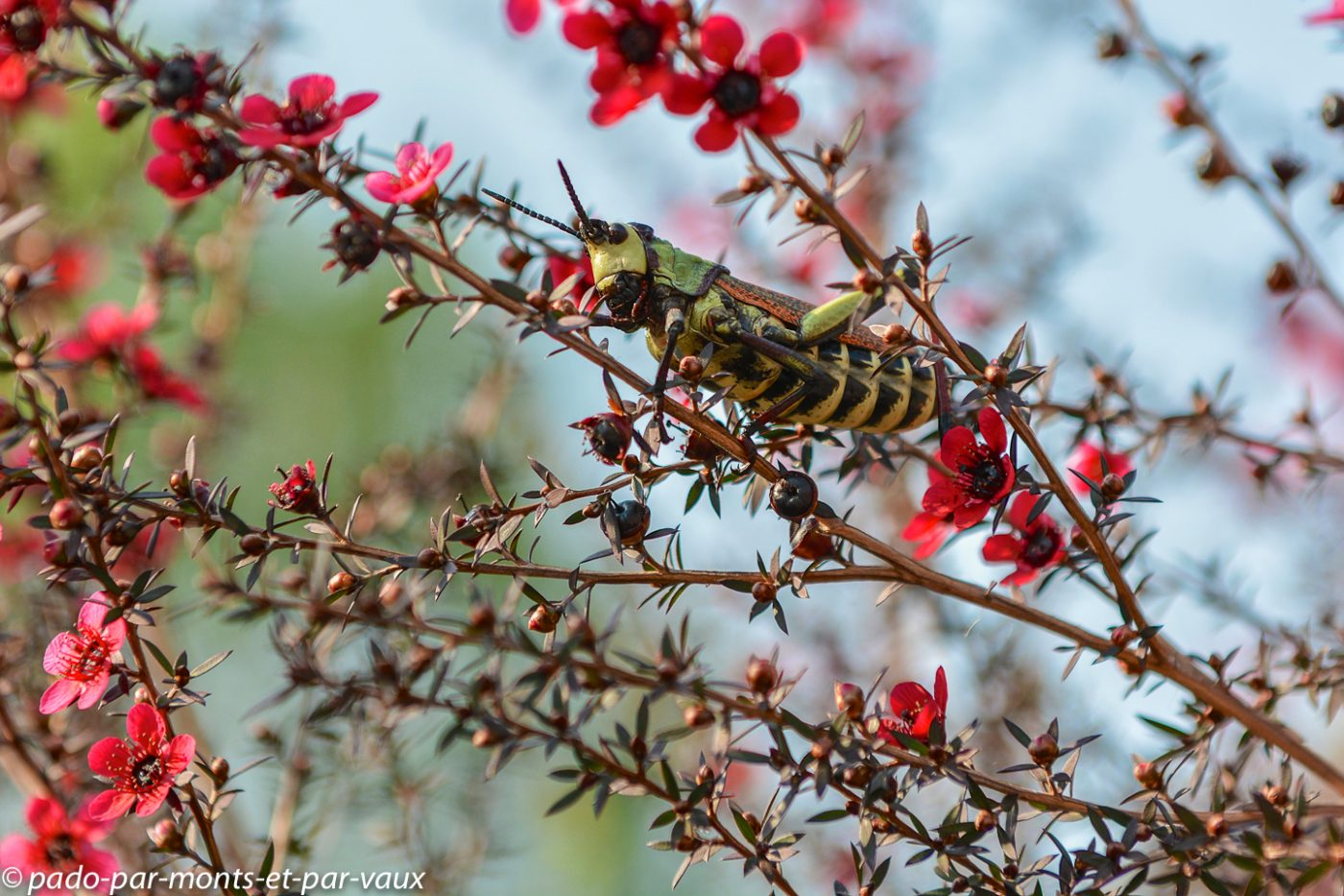 Drakensberg - criquet
