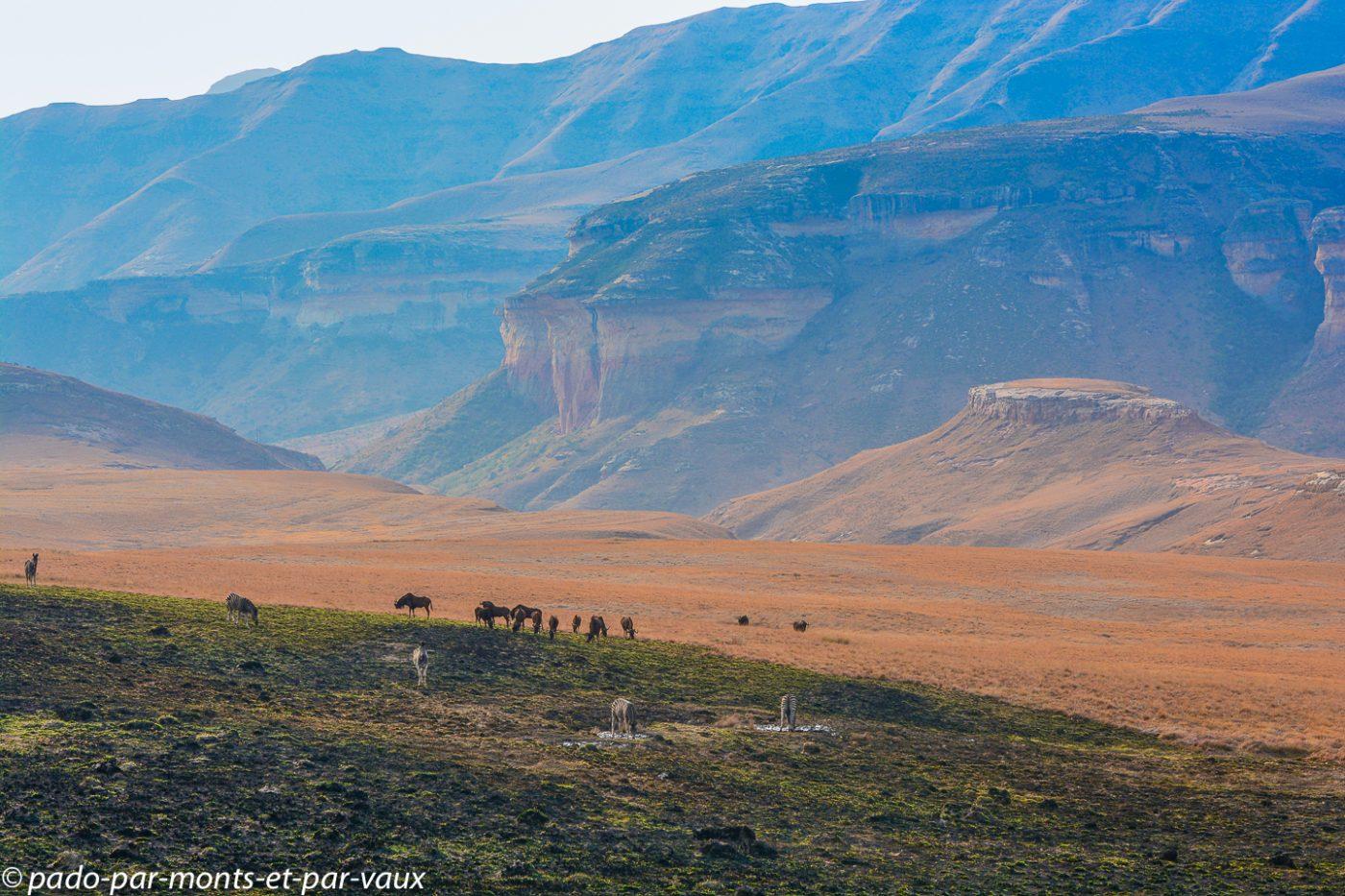 Afrique du Sud - Golden gate park - zèbres et gnous noirs