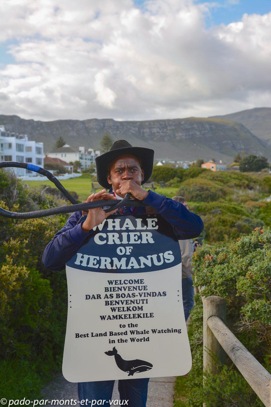 Hermanus- le crieur de baleines