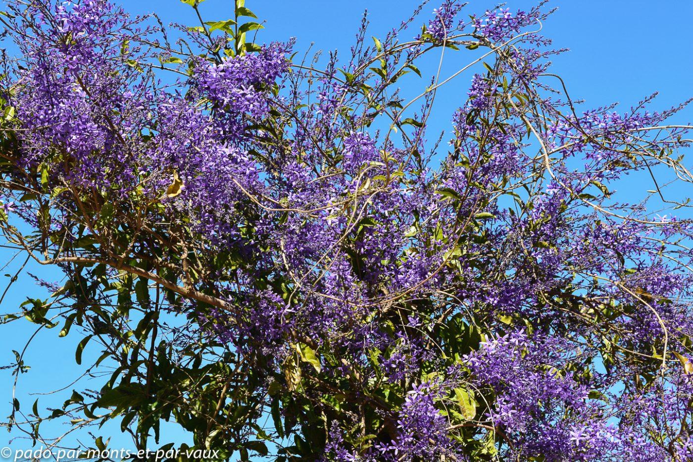 Stellenbosch - jardin botanique