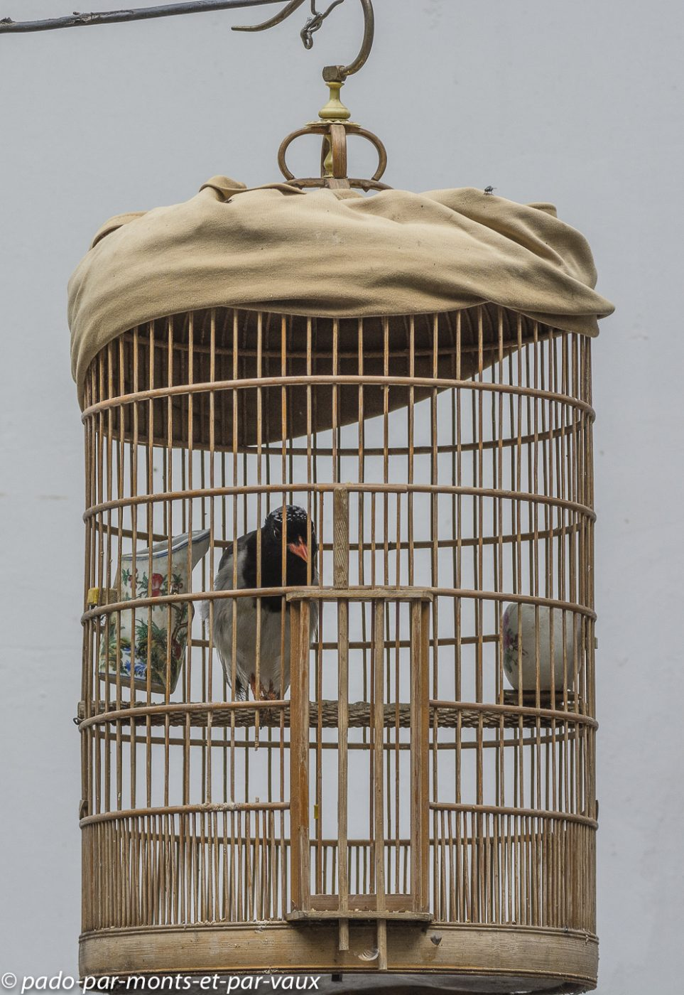 Xi'an  - Cage à oiseau
