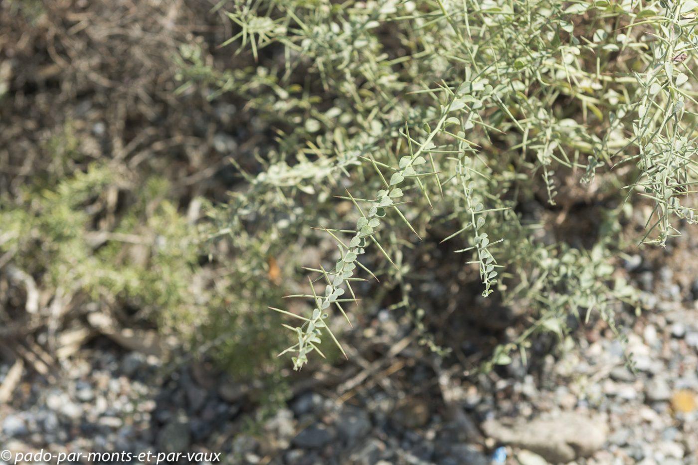 désert de Gobi - Yumen pass