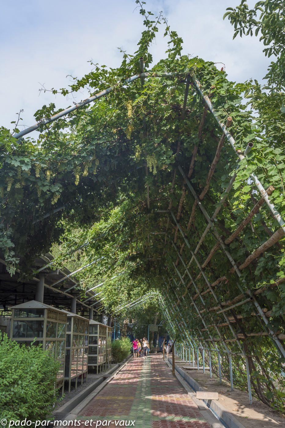 Turpan - irrigation type karez