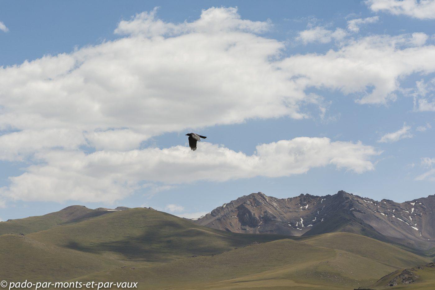 Lac Son Kul -  corbeau