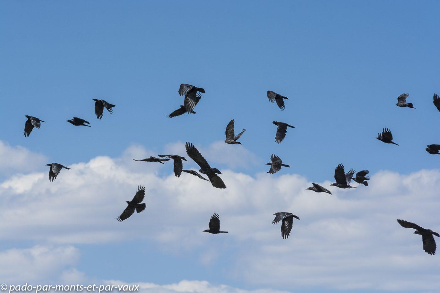 Lac Son Kul -  corbeaux