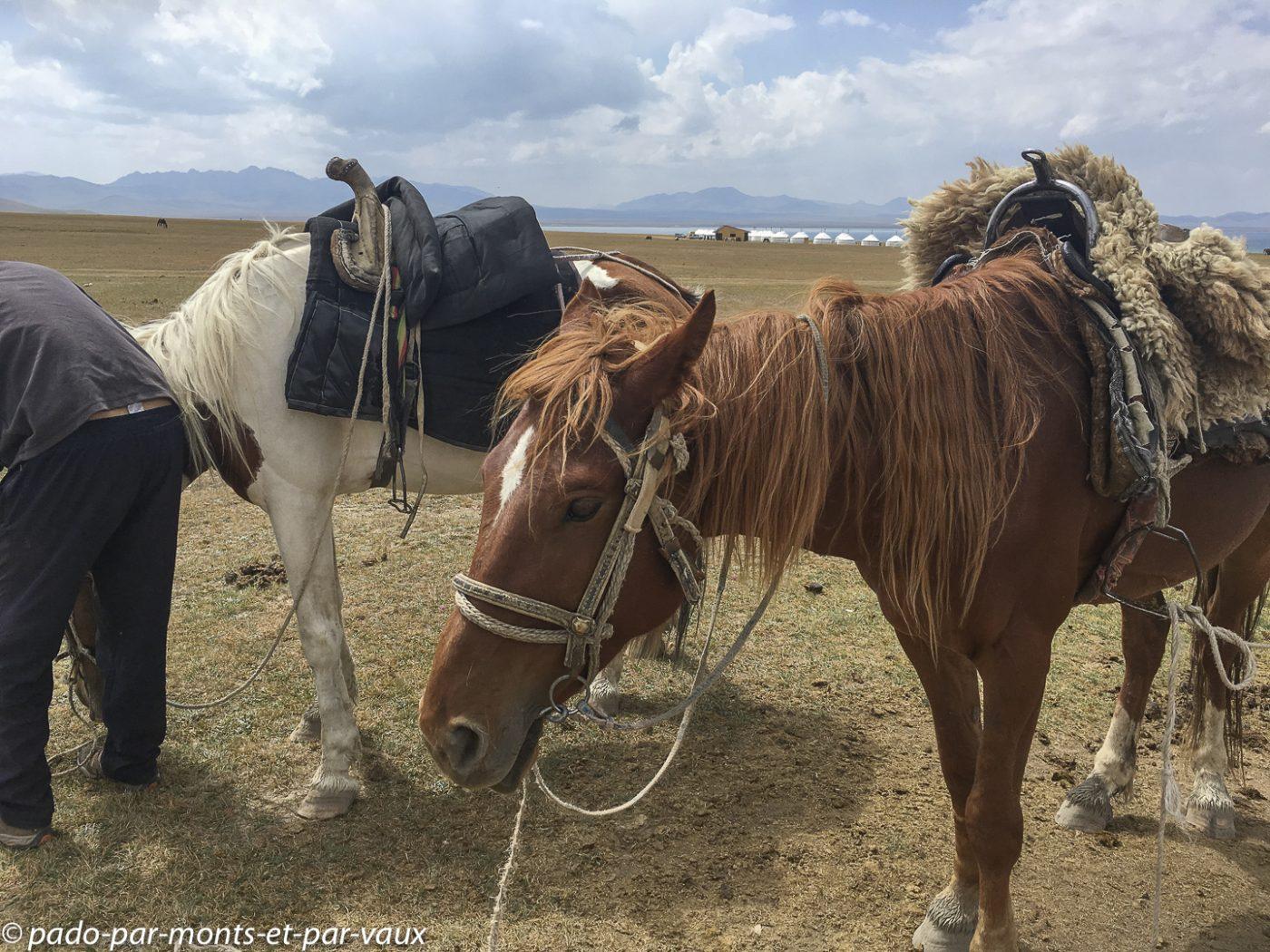 Lac Son Kul - nos chevaux