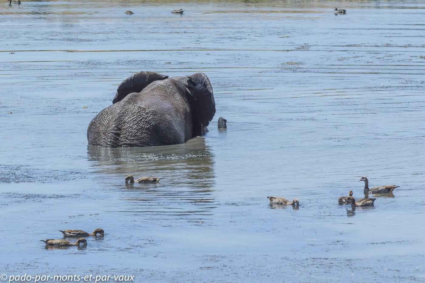 2019 Addo Elephant NP- Elephants