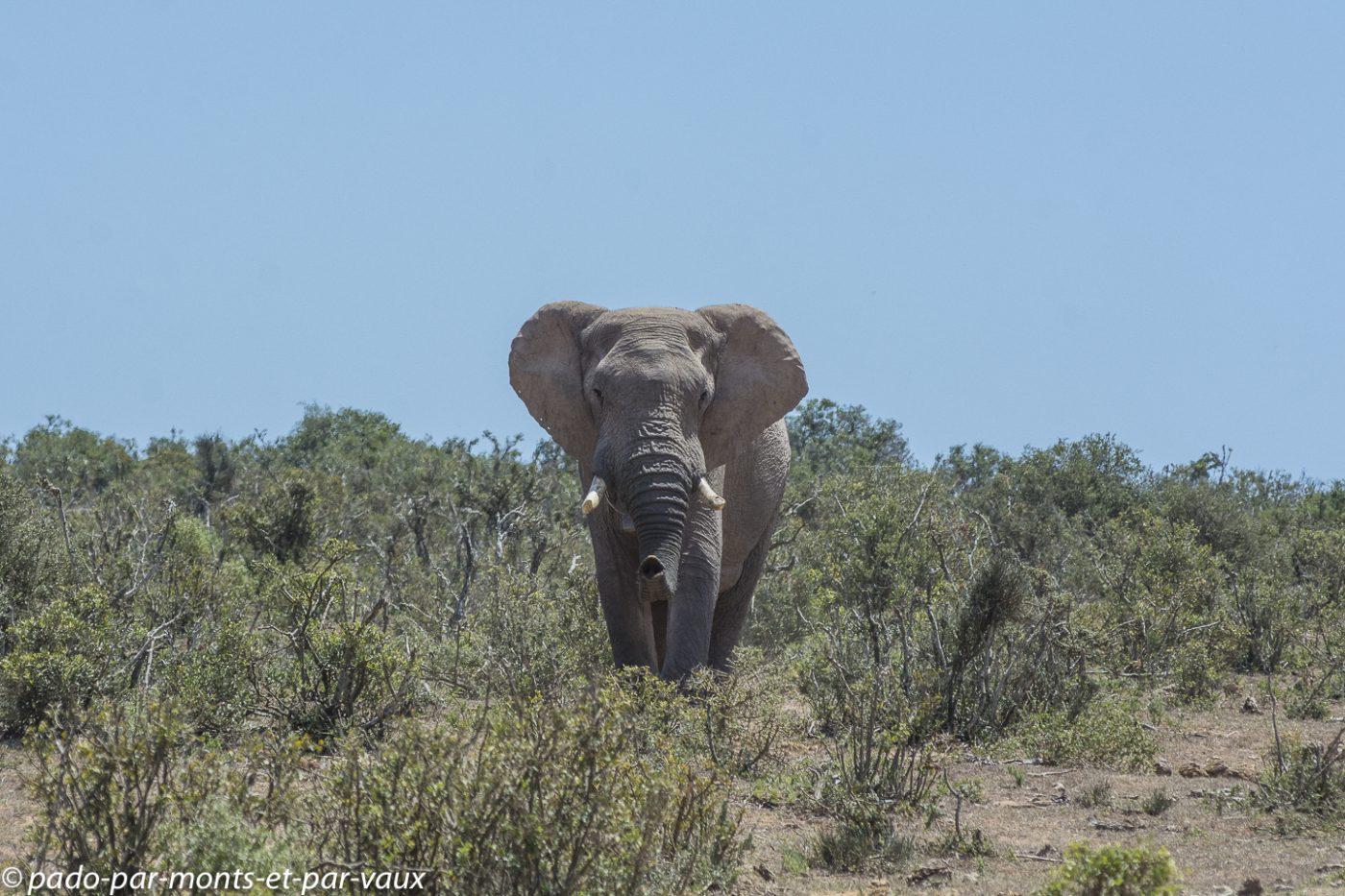 Addo Elephant NP - Eléphants