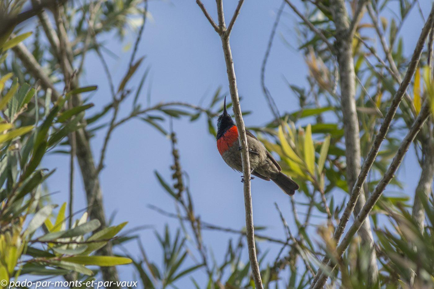 Misty Mountain Reserve - Souimanga chalybée