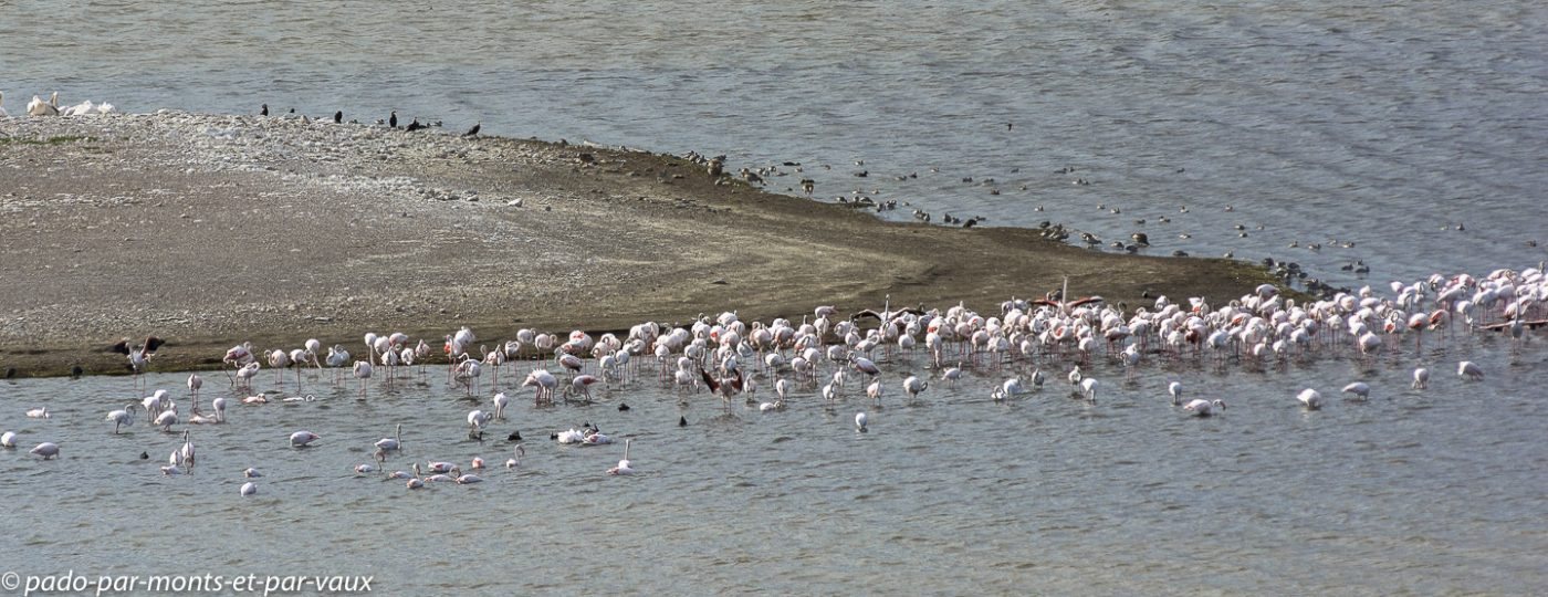 De Hoop Nature reserve - Flamants roses