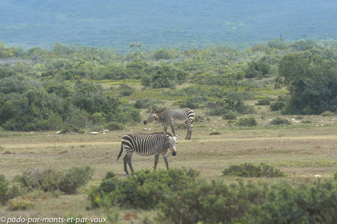 De Hoop Nature reserve  - Zèbres