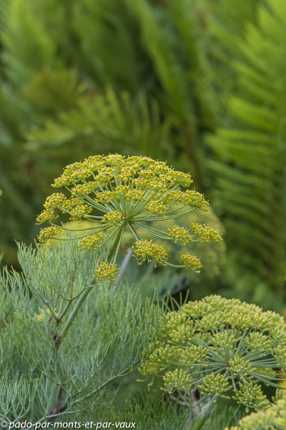 Harold Porter National Botanical garden
