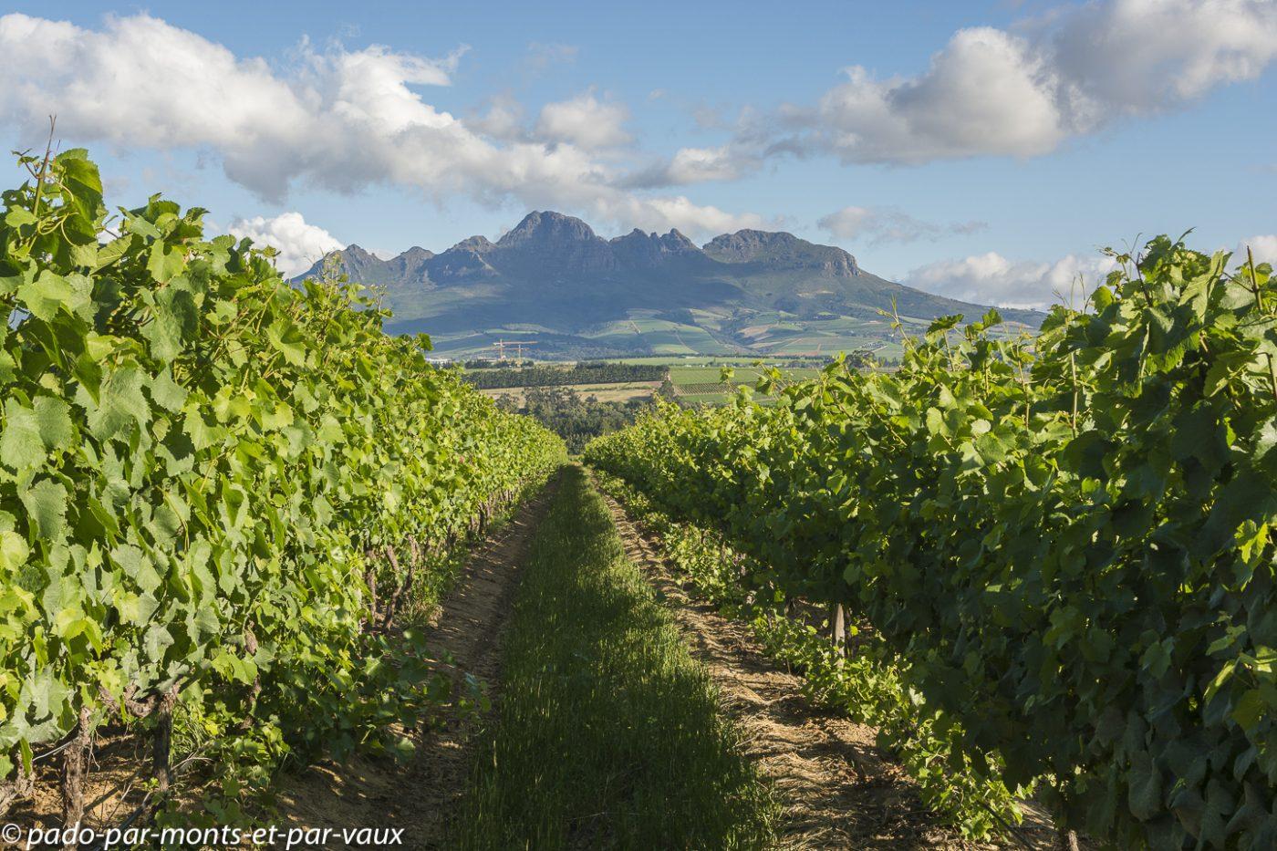 Stellenbosch - Asara Wine Hotel