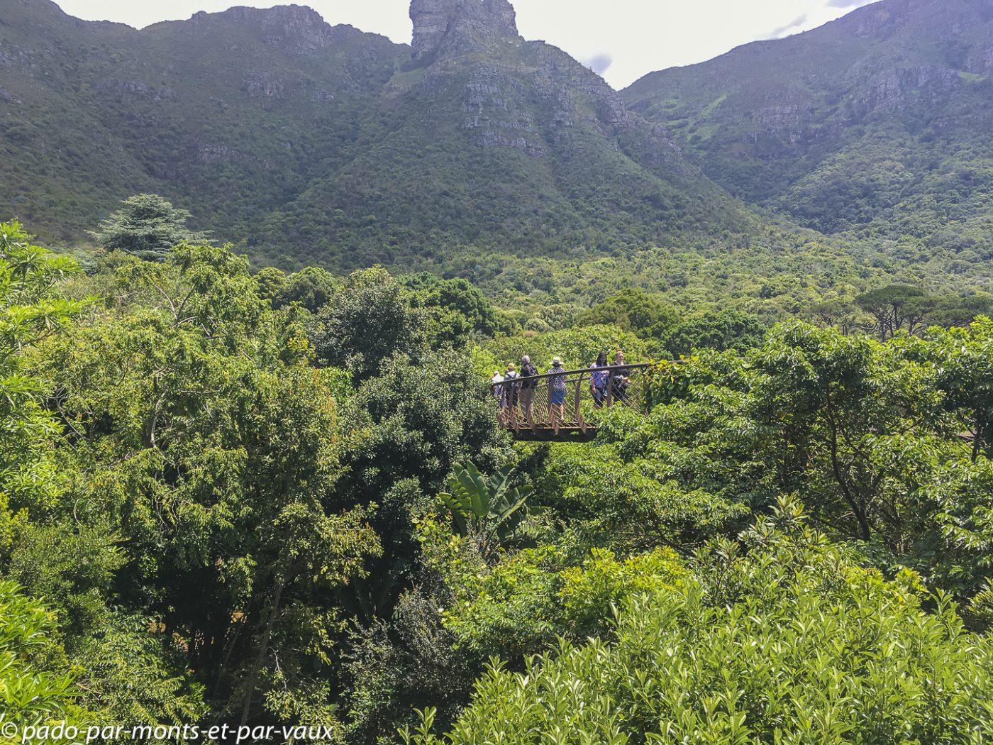 Kirstenbosch garden