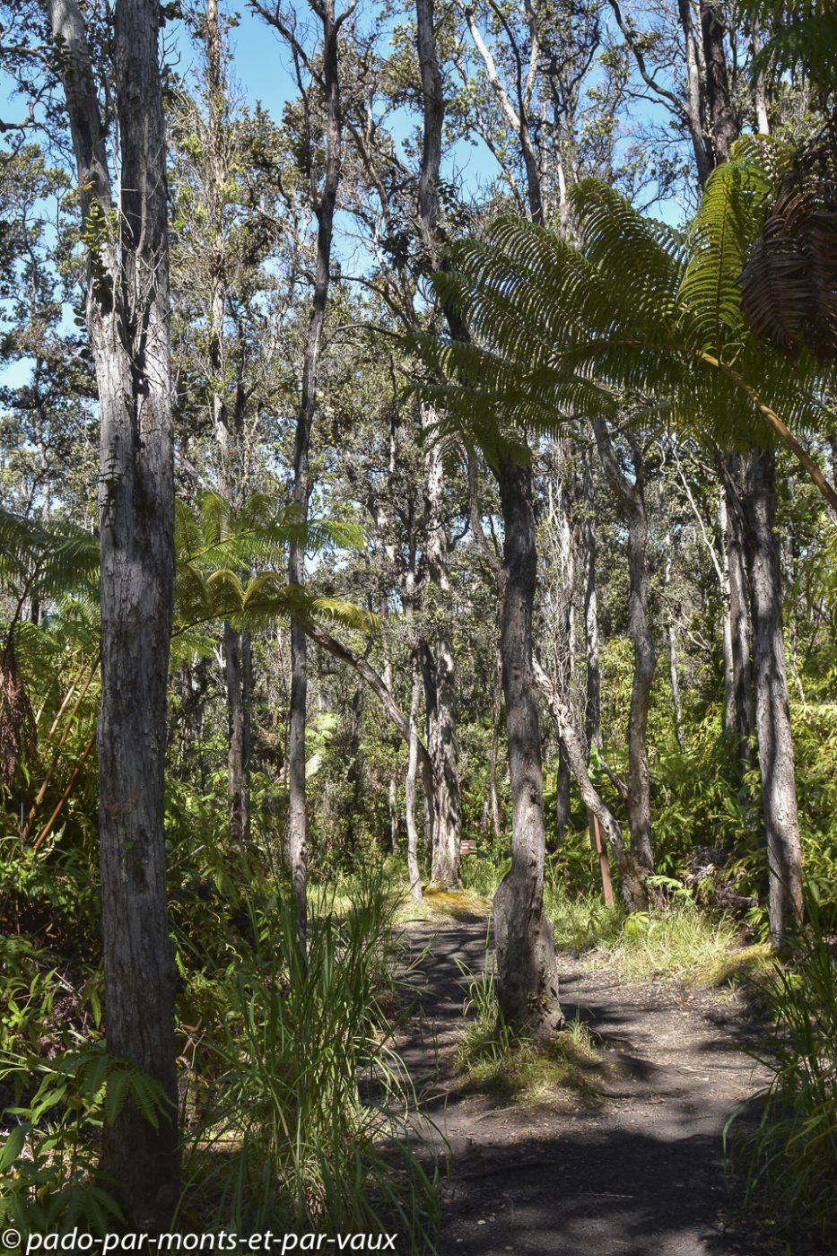 Big Island - Kilauea Iki trail