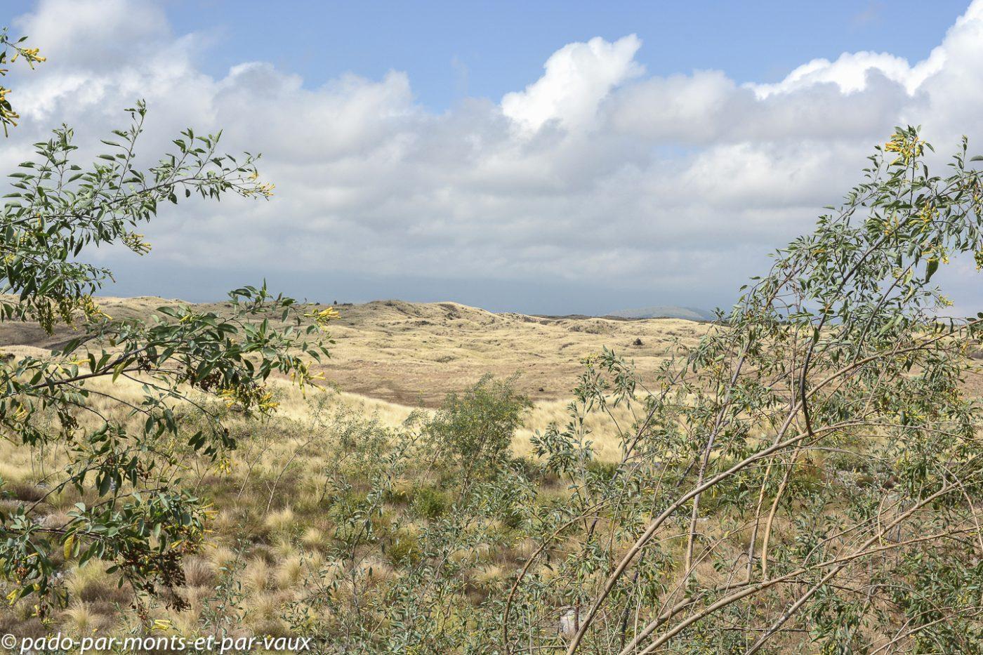 Route vers le Mauna Kea