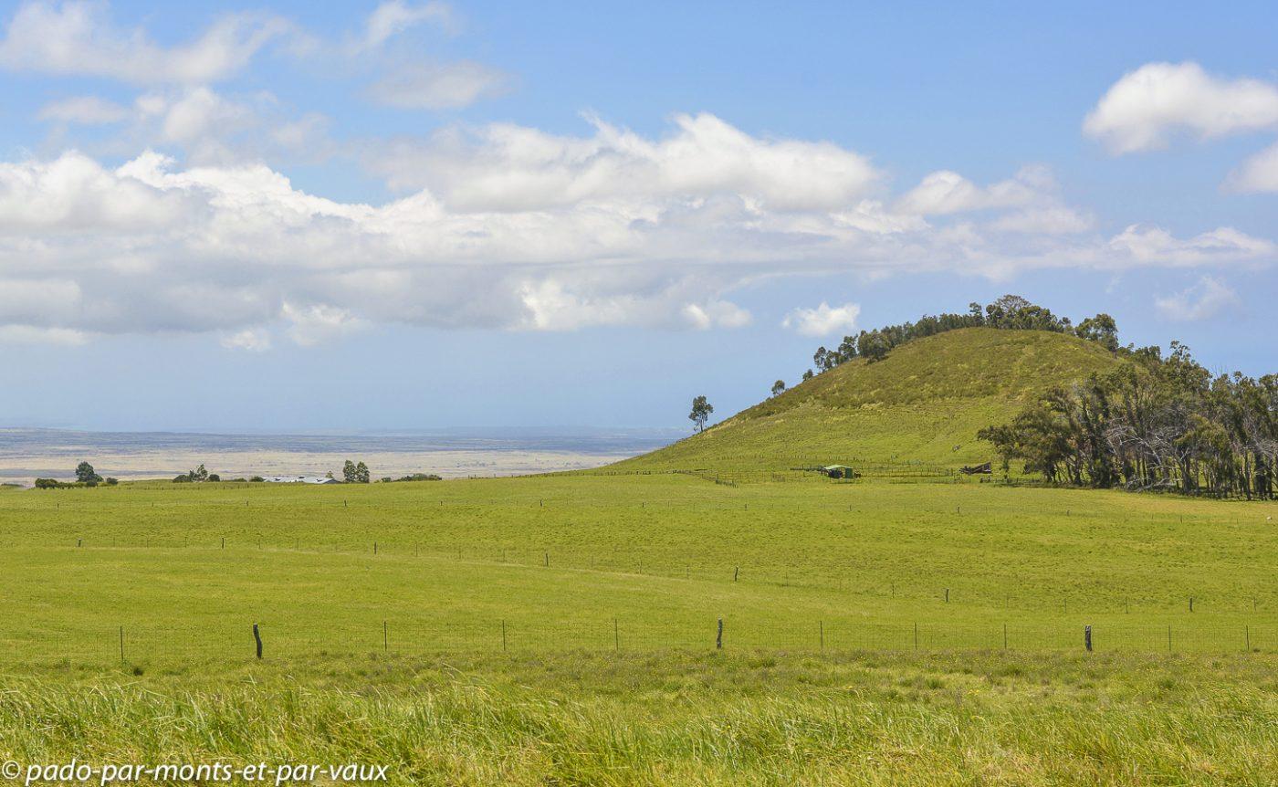 Big Island -  route vers Waimea