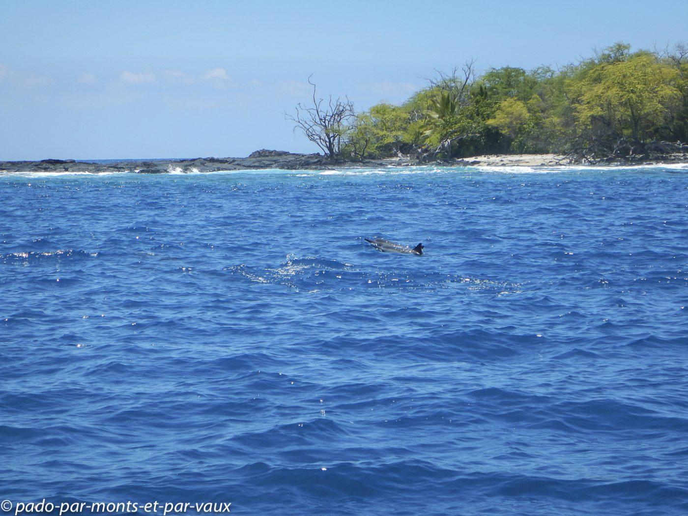 Big Island -  Dauphins à long bec