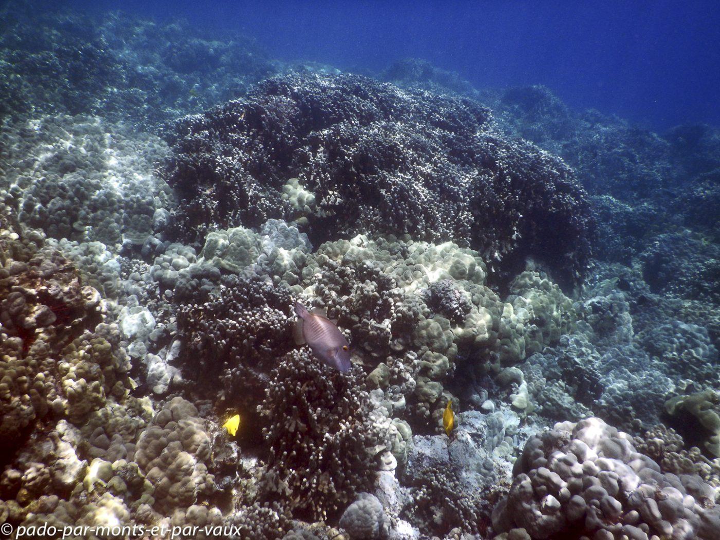 Big Island - Kona snorkeling