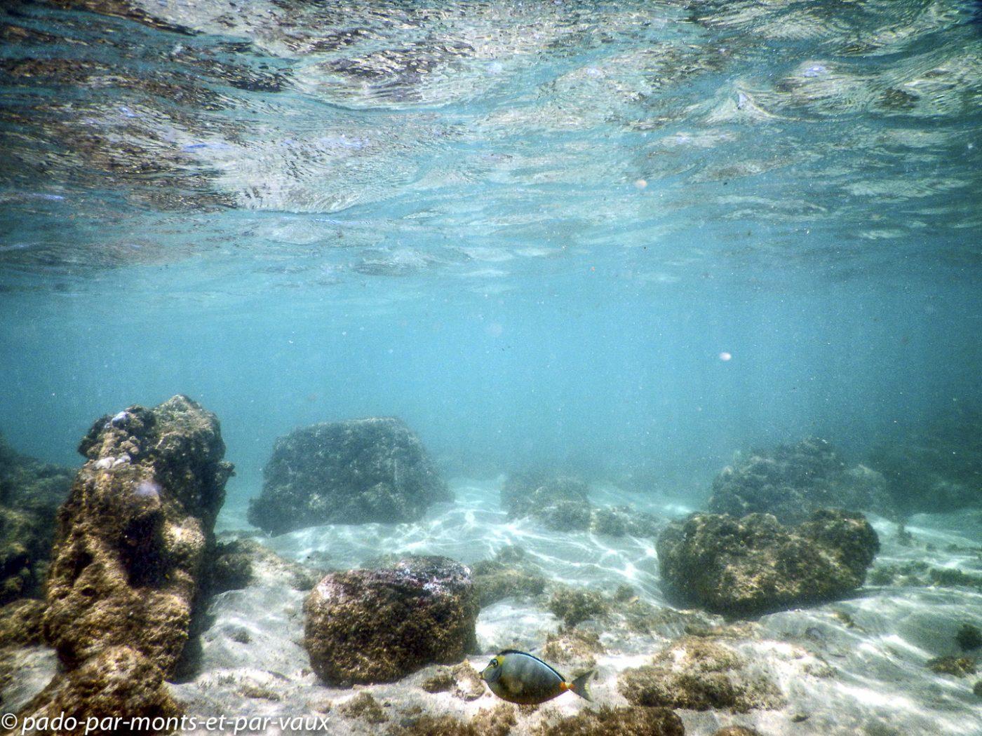 Kauai - Salt pond beach park - Nason à éperons orange