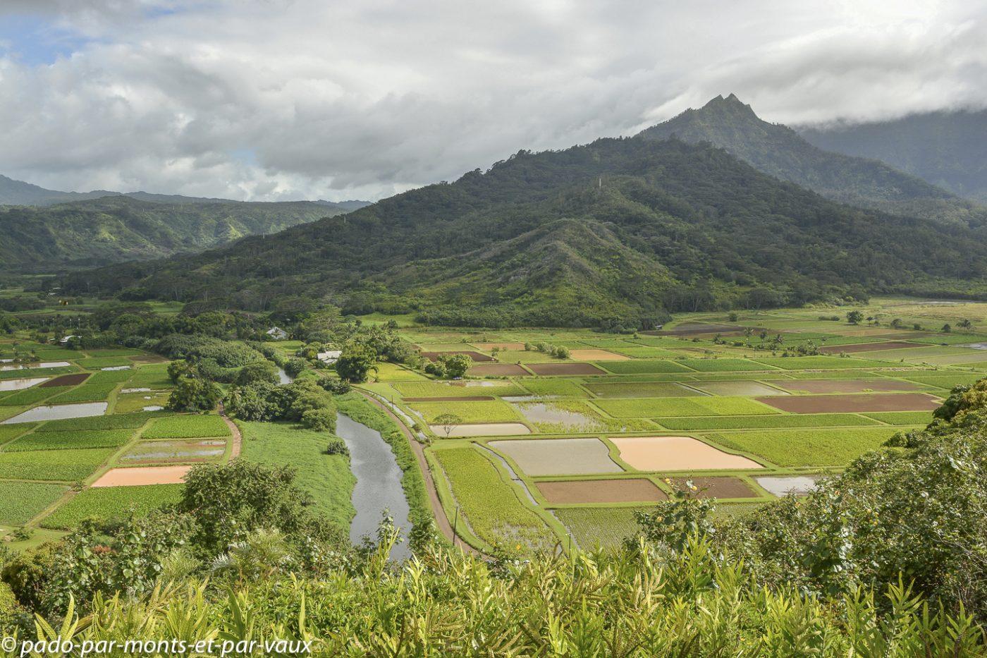 Kauai  - Hanalei valley lookout