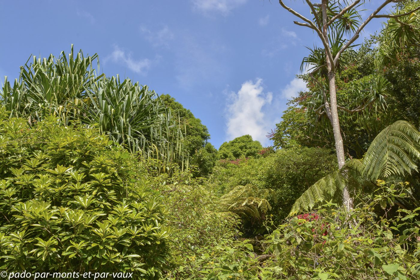 Limahuli garden - Kauai