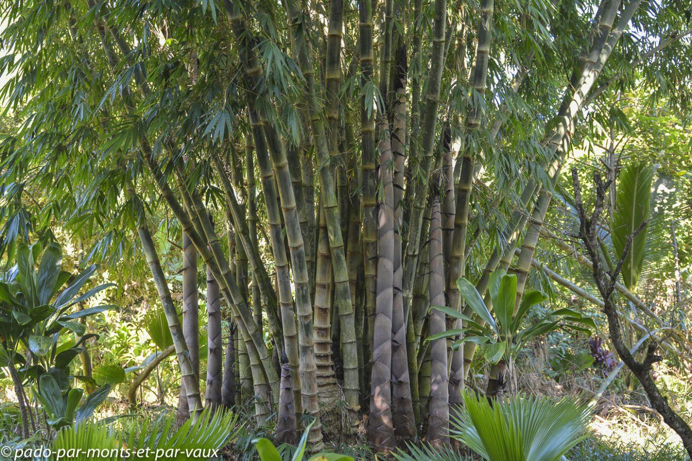 Maui - Route de Hana - Twin falls - Bambous