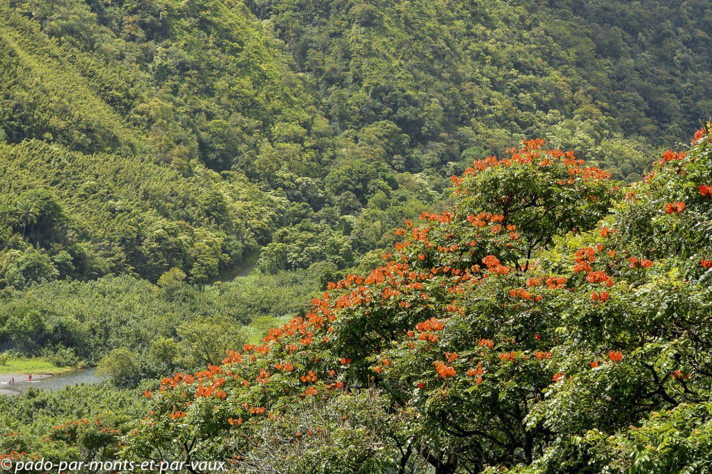 Maui - Route de Hana - Honomanu bay
