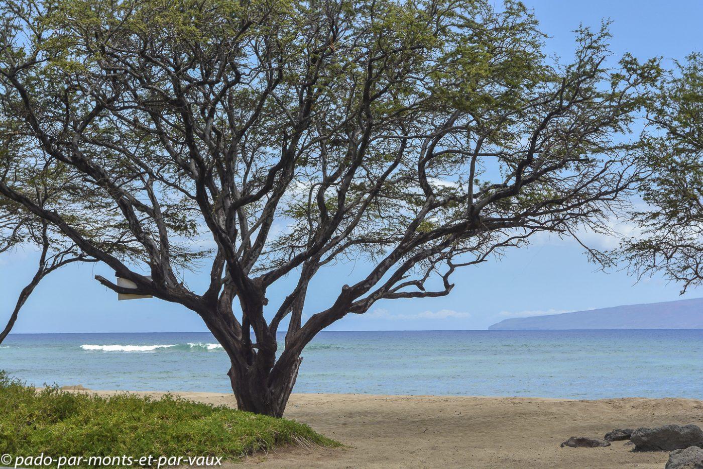 Maui -  route vers Lahaina
