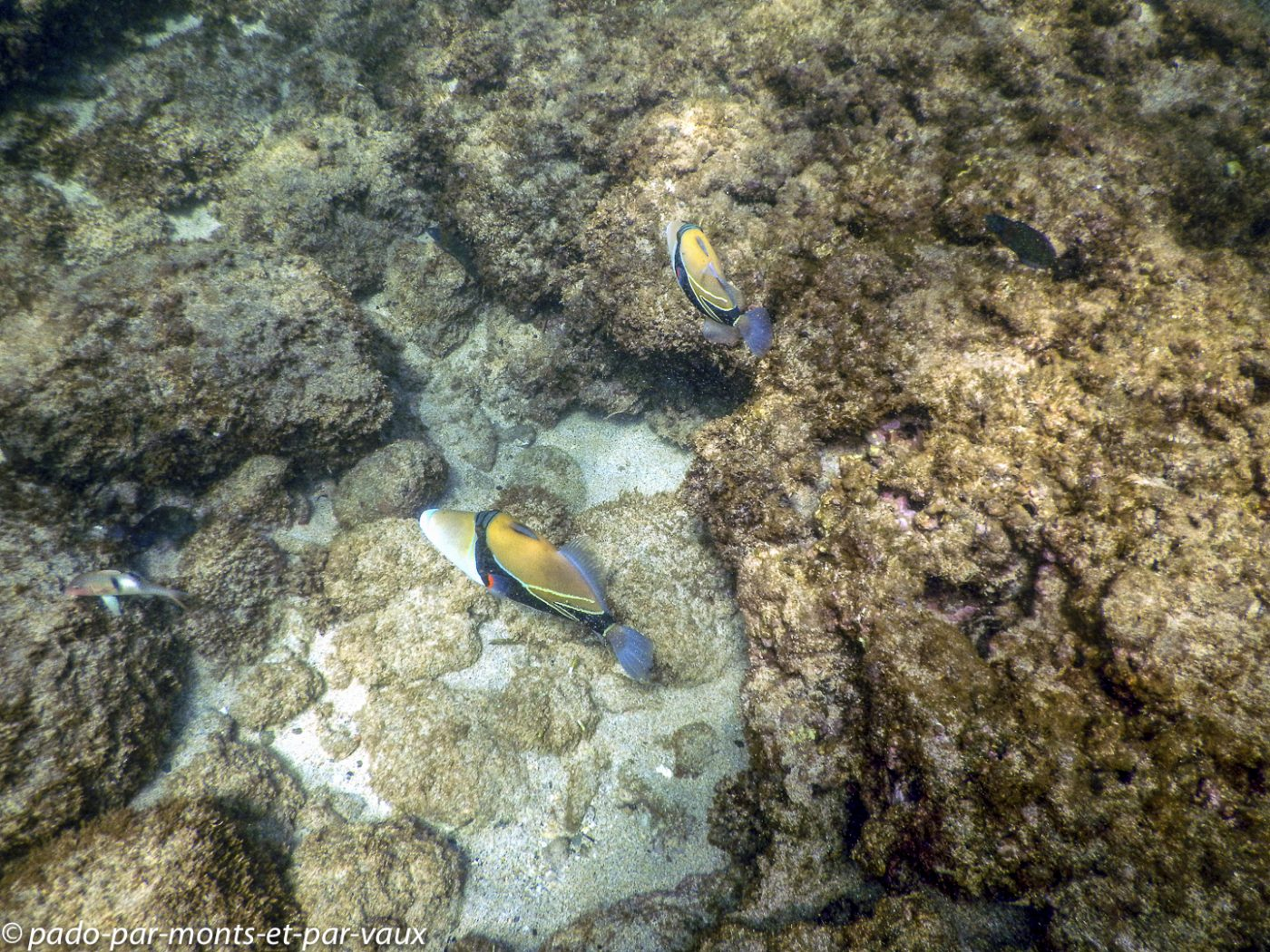 Maui - DT Fleming beach - Baliste écharpe