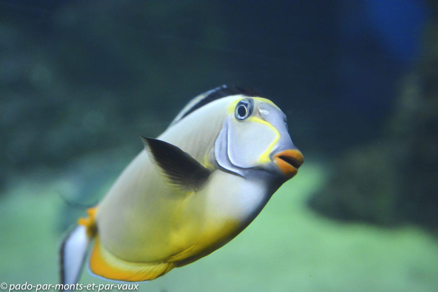 Maui -  Ocean center - Nason à éperons orange