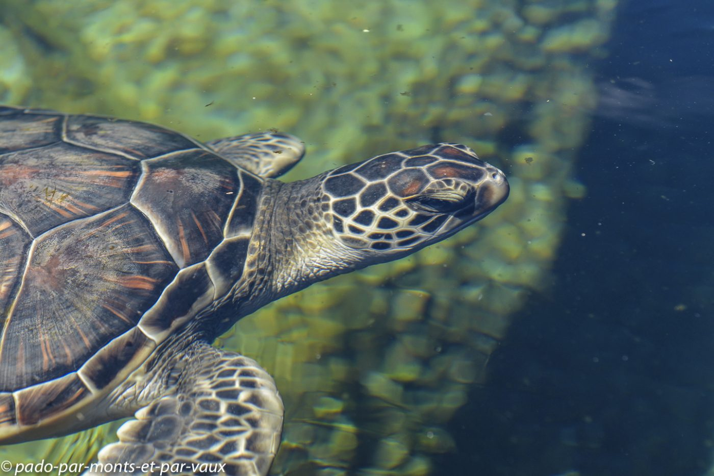 Maui -  Ocean center - tortue