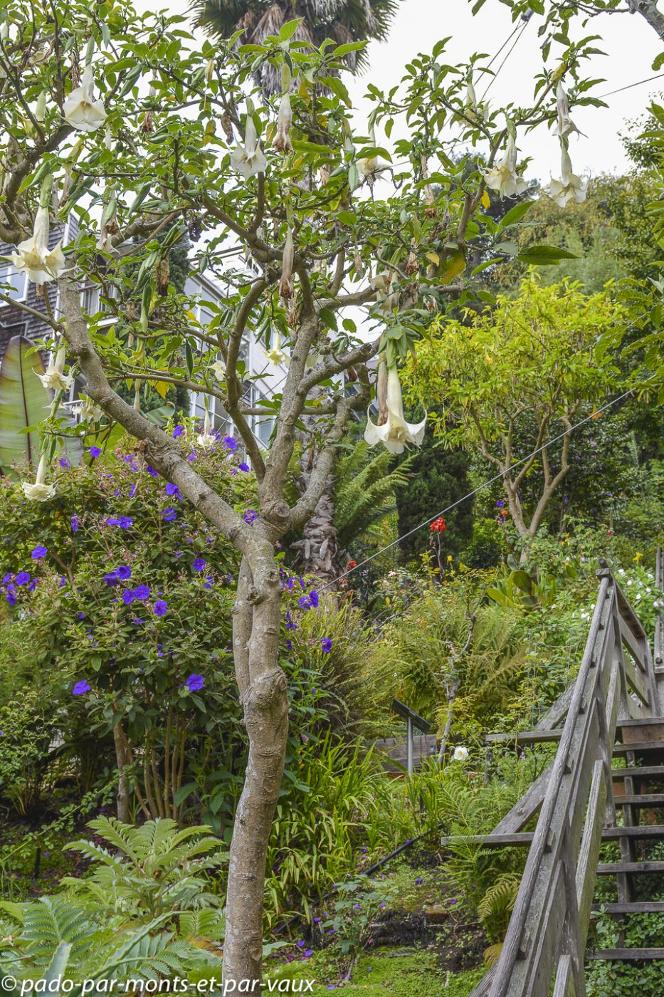 San Francisco - Filbert stairs