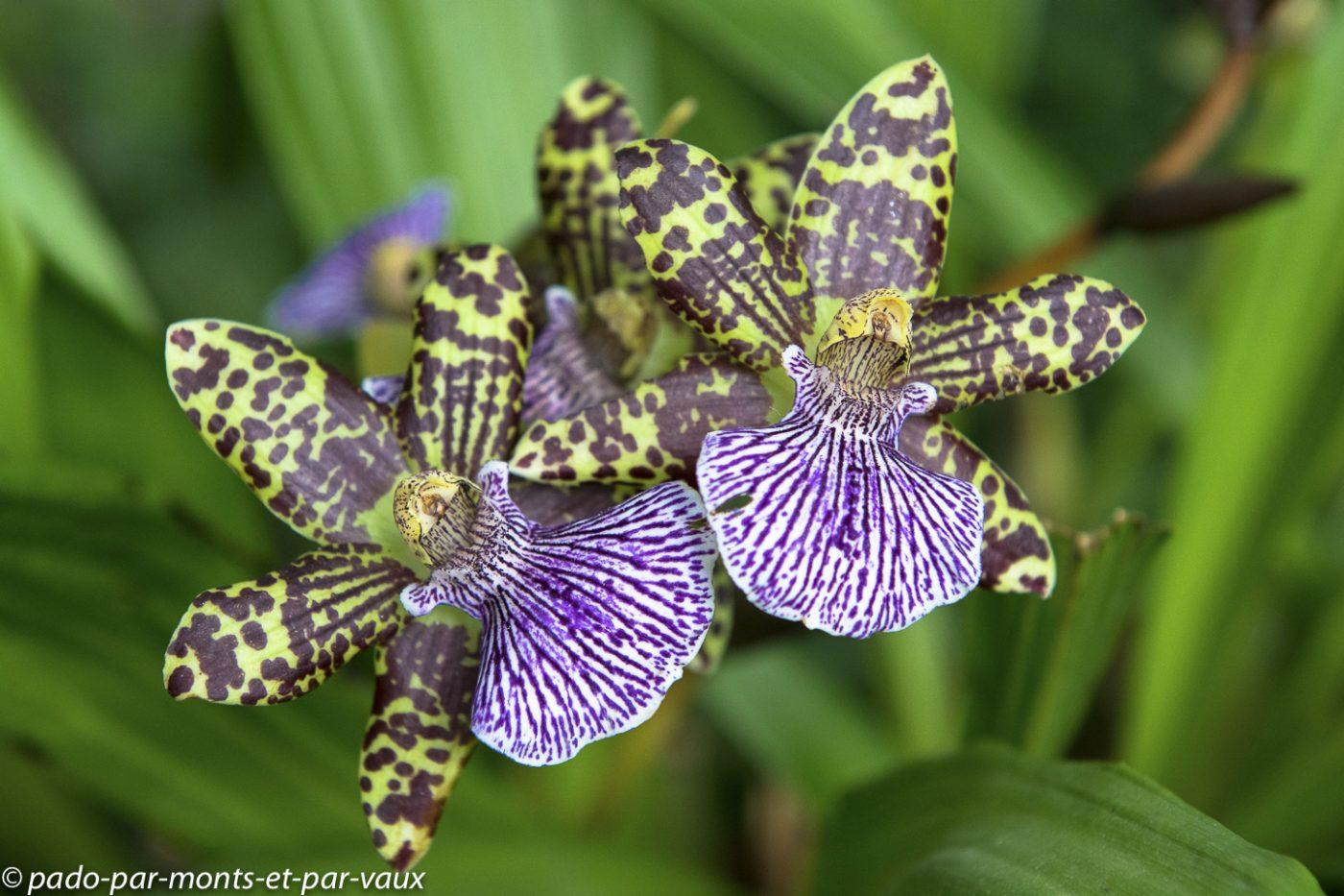 Jardin des plantes - Paris - exposition orchidées