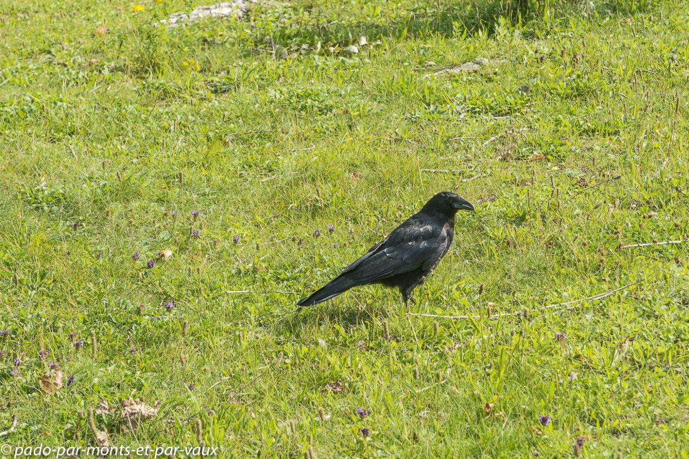Munich - Jardin anglais  corbeau