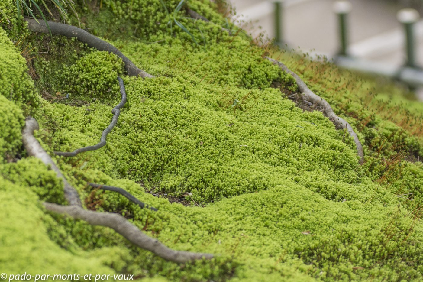 2019- Kanazawa jardin Kenrokuen
