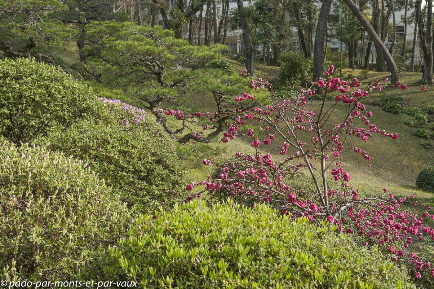 2019-Hiroshima jardin Shukkeien