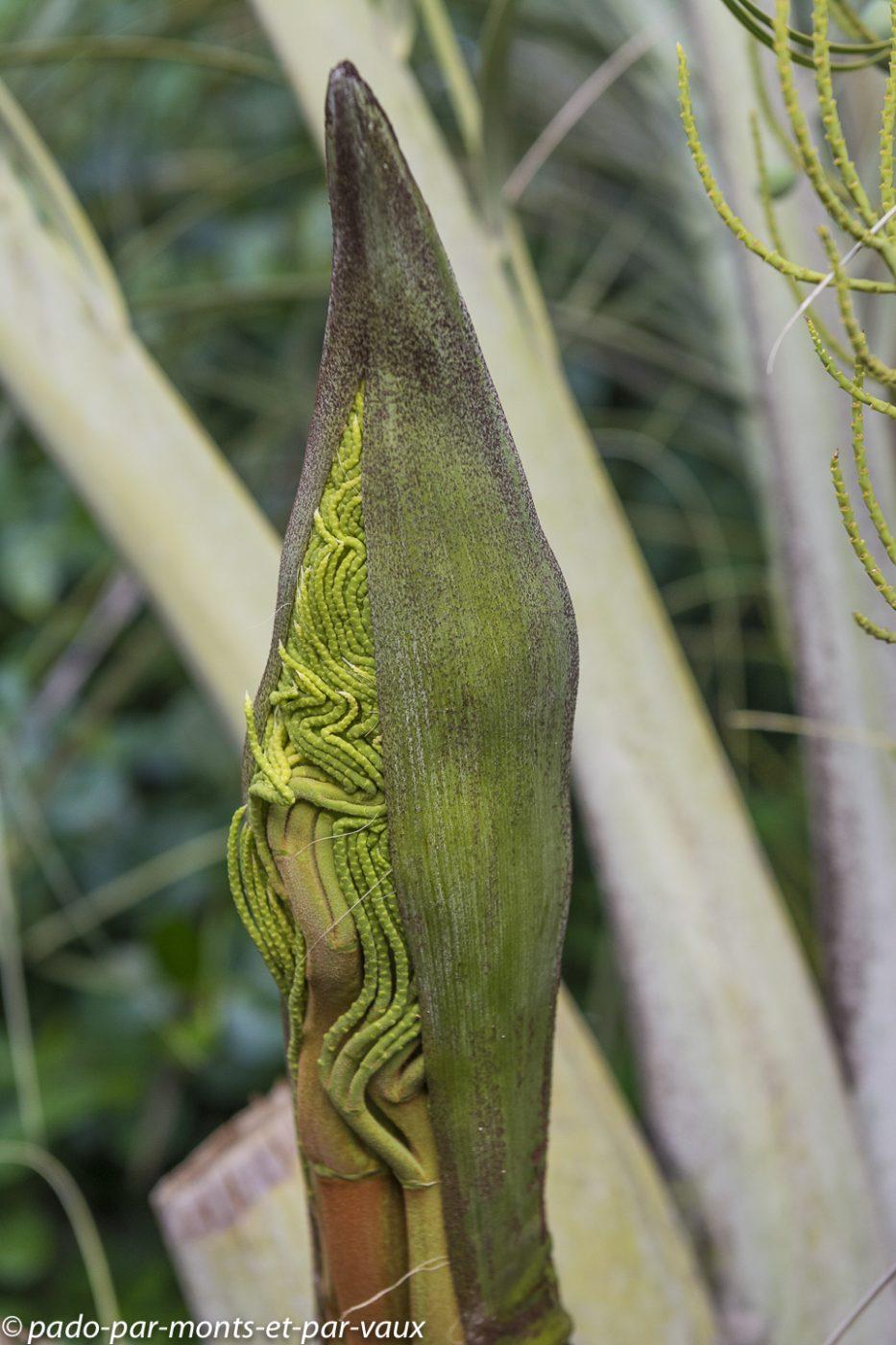 Shambala lodge-palmier