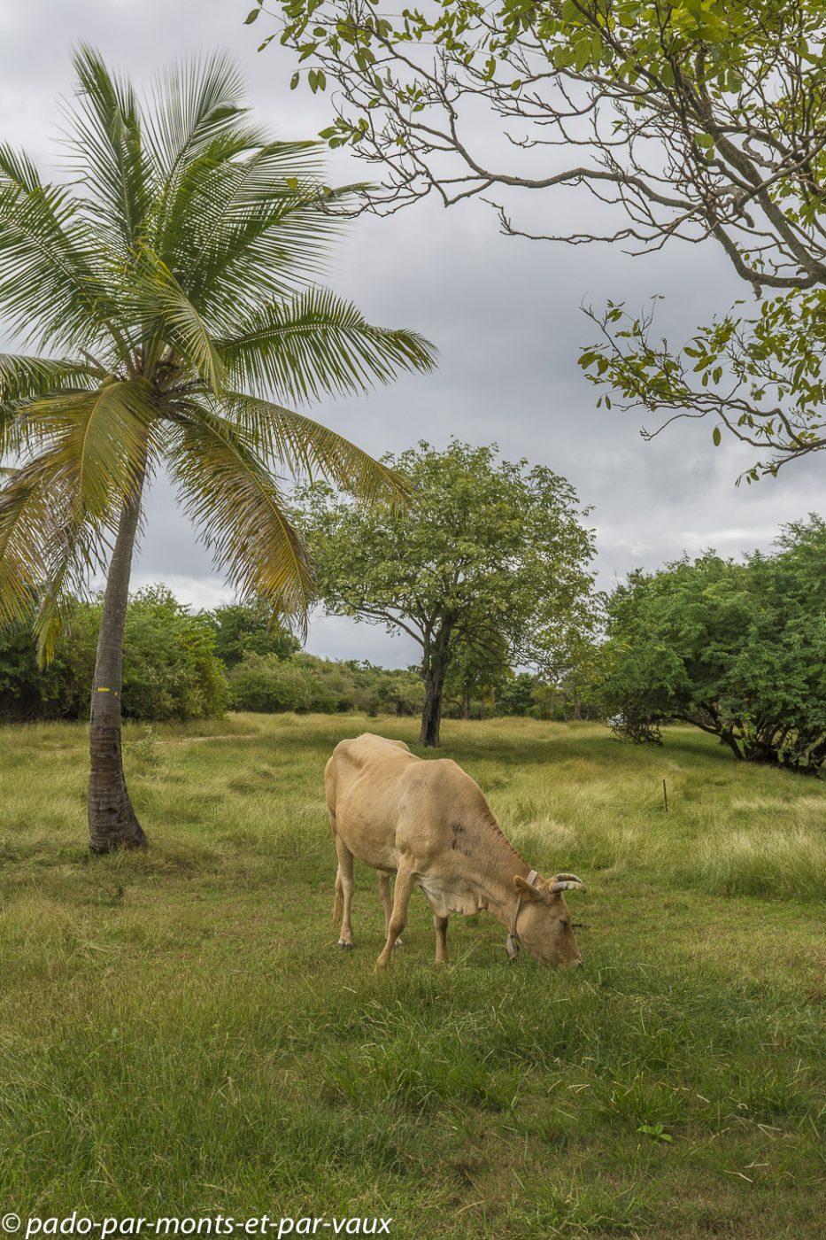 2021- Guadeloupe-Bois Jolan